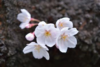 2015_03Kandagawa1983c.jpg