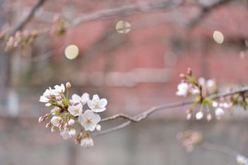 2015_03Kandagawa2015c.jpg