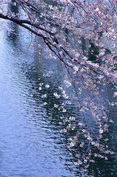 2015_03Kandagawa2029c.jpg