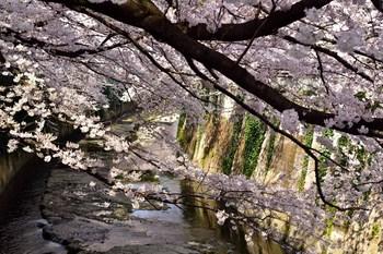 2015_03Kandagawa2_2752c.jpg