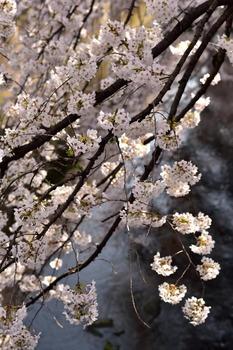 2015_03Kandagawa2_2767c.jpg