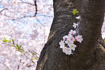 2015_03Kandagawa2_2782c.jpg