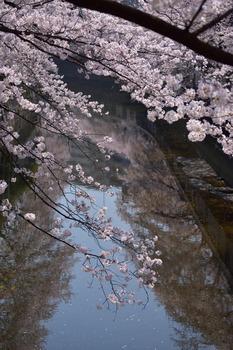 2015_03Kandagawa2_2837c.jpg