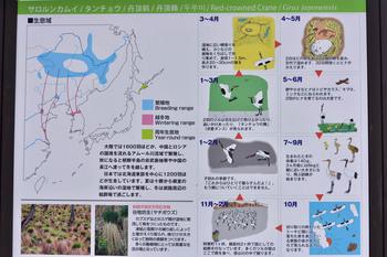 2015_03Kushiro_tancho2572c.jpg