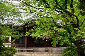 2015_04Kandagawa_Mejirodai3988c.jpg