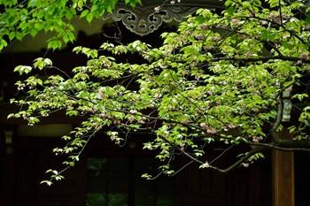 2015_04Kandagawa_Mejirodai3989c.jpg