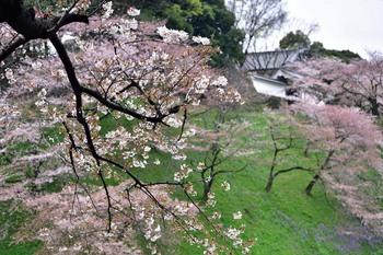 2015_04Kudan_Iidabashi3163c.jpg