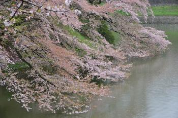 2015_04Kudan_Iidabashi3176c.jpg