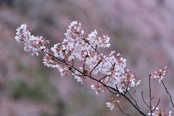 2015_04Kudan_Iidabashi3183c.jpg