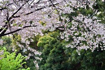 2015_04Kudan_Iidabashi3208c.jpg