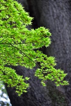 2015_04Kudan_Iidabashi3256c.jpg