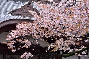 2015_04Kudan_Iidabashi3262c.jpg