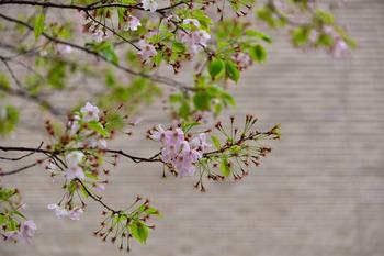 2015_04Kudan_Iidabashi3265c.jpg