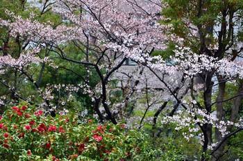 2015_04Kudan_Iidabashi3268c.jpg