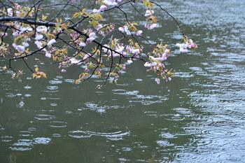 2015_04Shinjyuku3334c.jpg