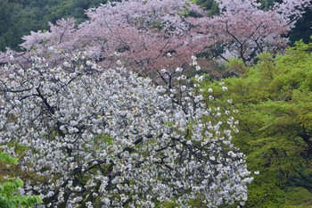2015_04Shinjyuku3338c.jpg
