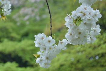 2015_04Shinjyuku3342c.jpg