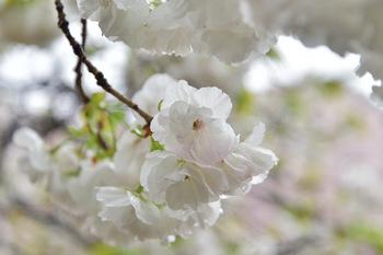 2015_04Shinjyuku3352c.jpg