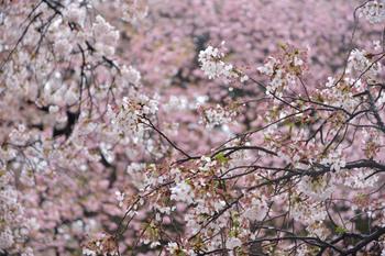 2015_04Shinjyuku3402c.jpg