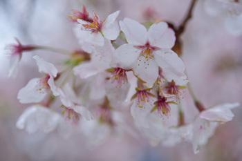 2015_04Shinjyuku3414c.jpg