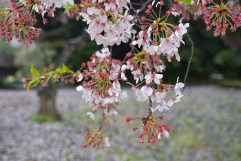 2015_04Shinjyuku3428c.jpg