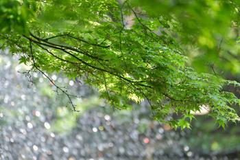 2015_05Inokashira4631c.jpg