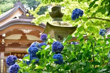 2015_06Takahatafudo5438c.jpg